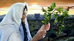 Parable_Fig_Tree_Israel