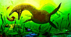 macroevolution goo to zoo